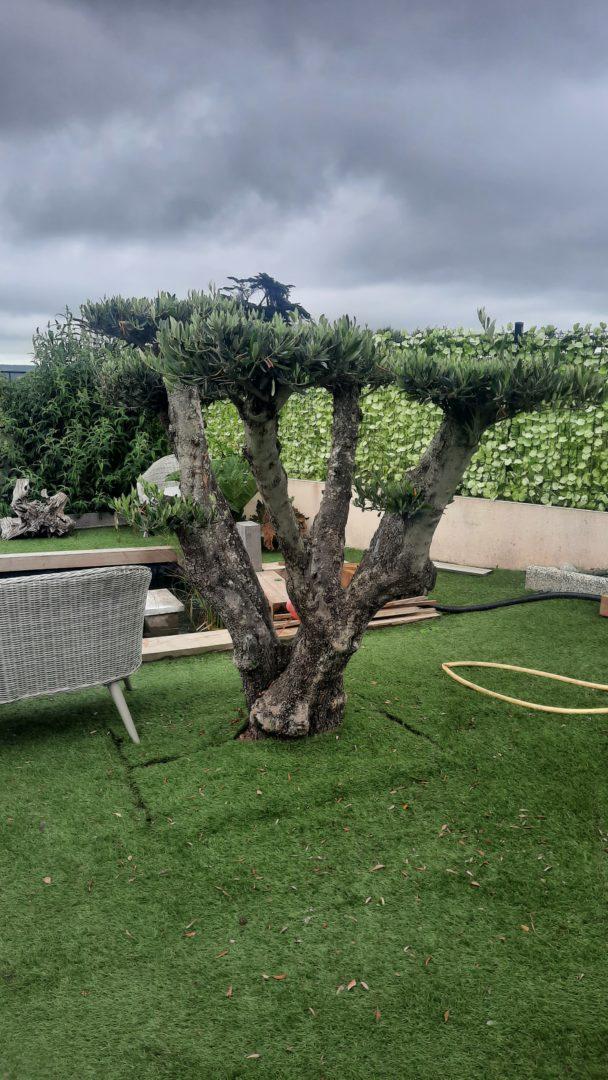 mise-en-place-arbre-a-nuage-crozon